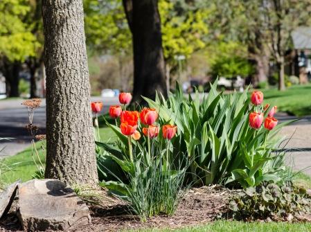 Spokane_Red_Flowers_Sales_10
